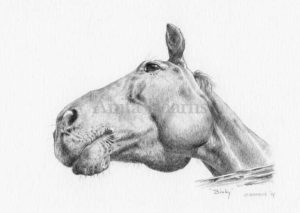 Horse portrait of Binky