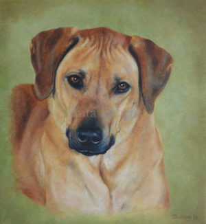 Dog portrait of Bodi - 10