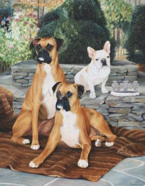 Dog portrait of Calvin, Leo and Dallas - 42