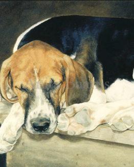 Dog portrait Dreaming of Cubbing