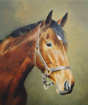 Horse portrait of Finery - 8