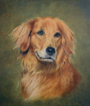 Dog portrait of Lucky - 11