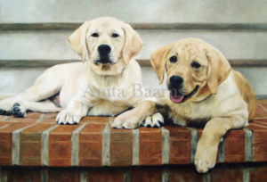 Dog portrait of Mackey and Riley - 22