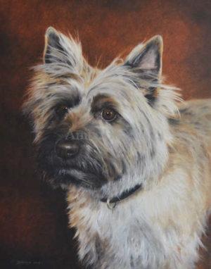 Dog portrait of Maestro - 16