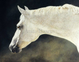 Horse portrait of Sunny - 16