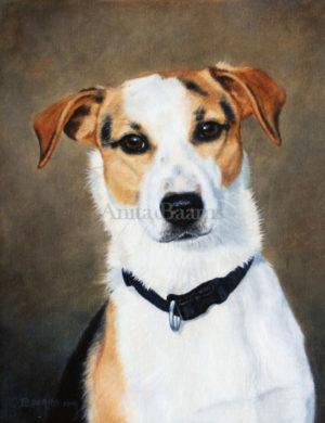 Dog portrait of Gijs - 9