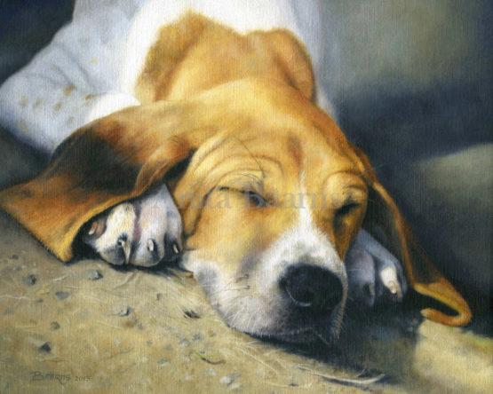 Dog portrait of Sunrise