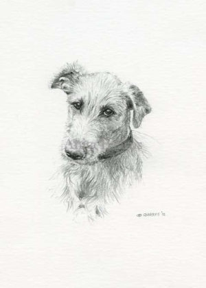 Dog portrait of Modoc